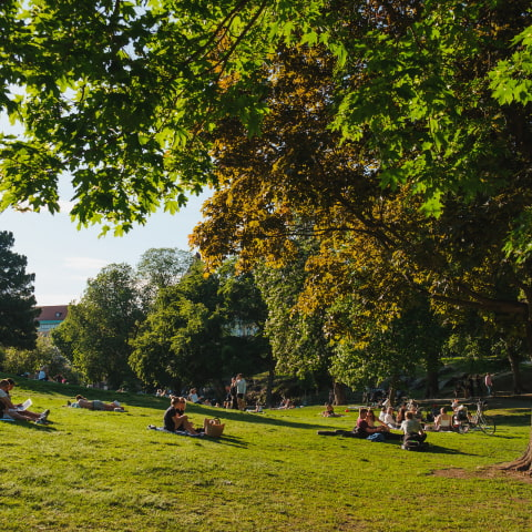 The best picnic spots in Stockholm