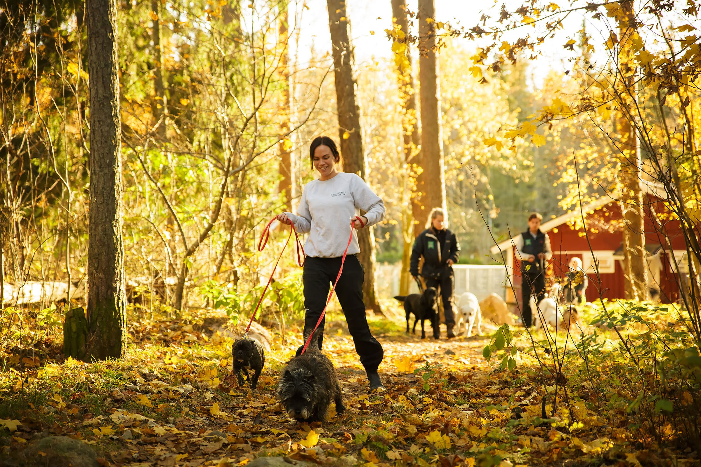 Stråk för hundpromenader i Stockholm