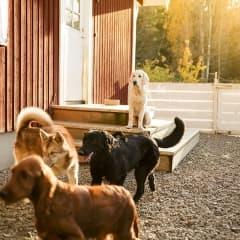 Guiden till hundvänliga Stockholm