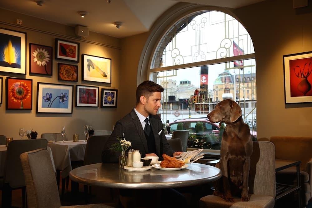 Dog-friendly cafés and restaurants in Stockholm
