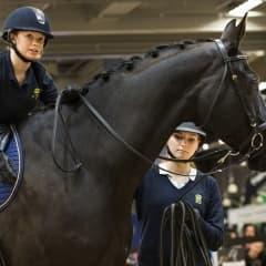 Hästfest i stan när Gothenburg Horse Show intar Svenska Mässan