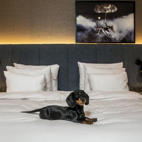 Hundvänliga hotell i Stockholm