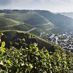 Vinprovning med tyska viner