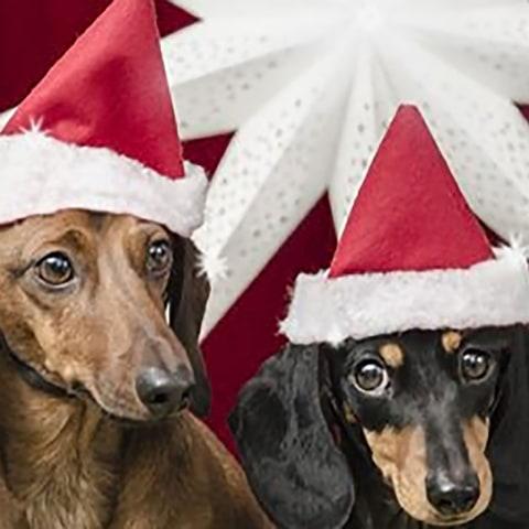 Julbutik för hundar öppnar i Stockholm