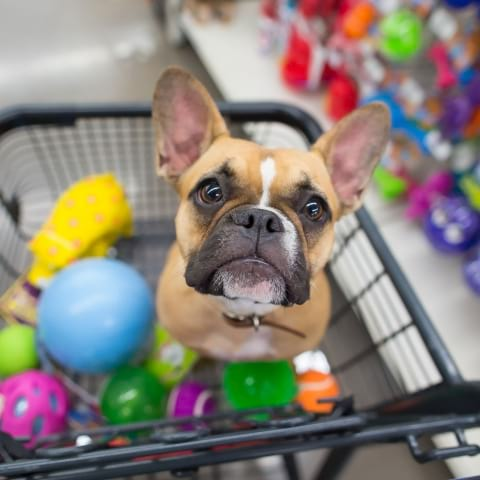 Guiden till hundvänliga butiker i Stockholm