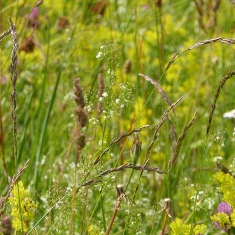 Blomstervandring i sensommaren