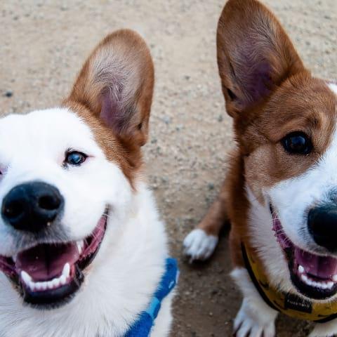Nu öppnar Sveriges första café och bageri för hundar