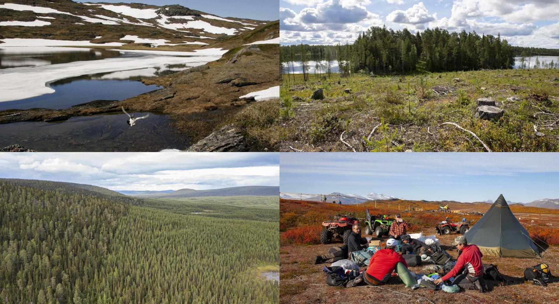 Samiska nationaldagen: Tillståndet i Världsarvet Laponia