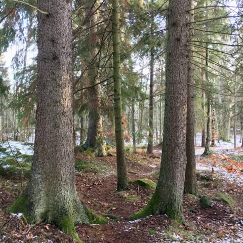Vinteryoga i Djurgårdsskogen och guidning i historiska spamiljöer
