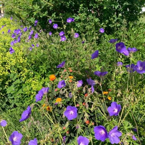 Fjärilsstig och pollineringsängar på Fjärilshuset
