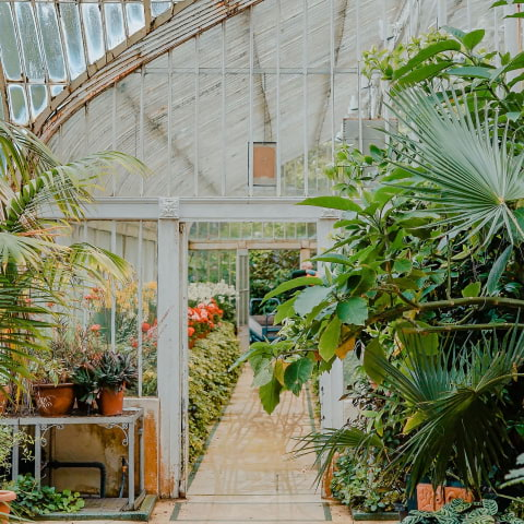köpa plantor stockholm