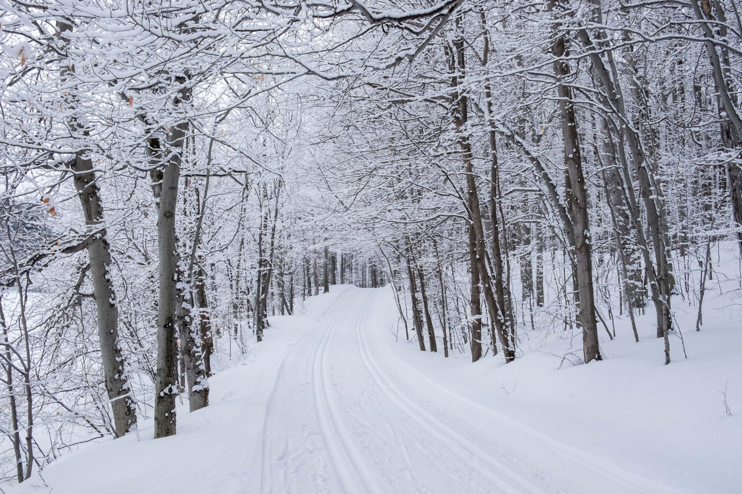 Här kan du åka längdskidor i Stockholm