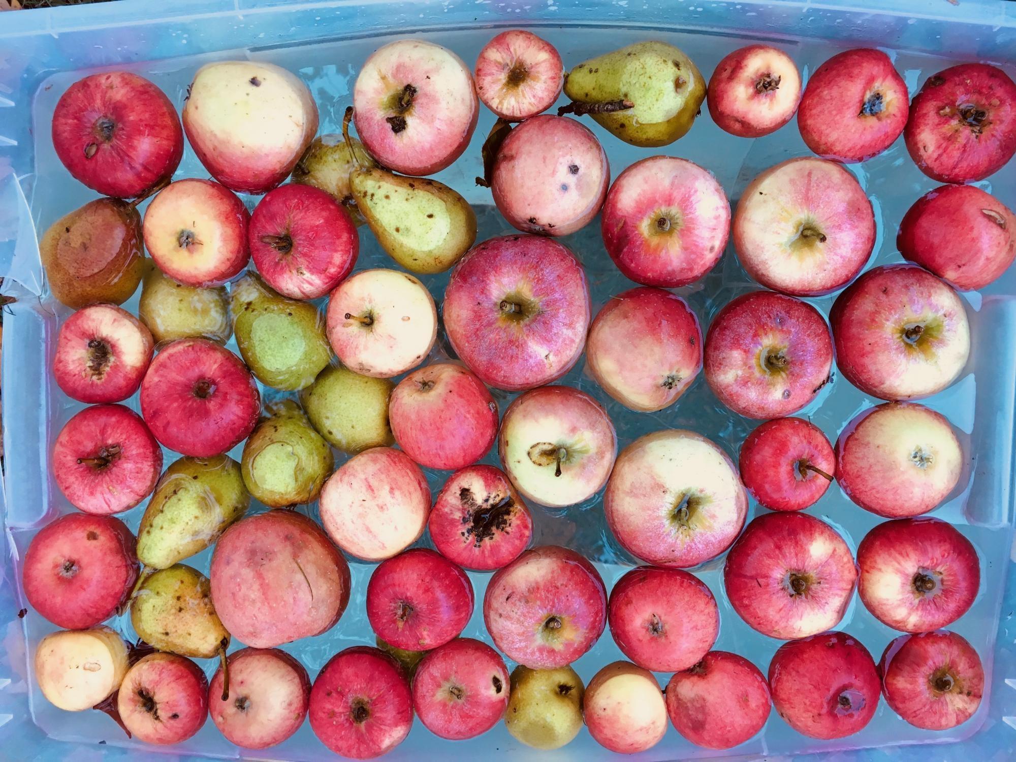 The golden season: apple pressing and mushroom foraging at Haga*