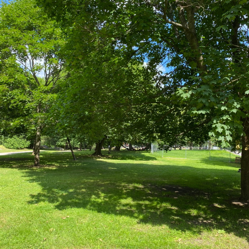 Bild från Grynkvarnsparken av Peter B.