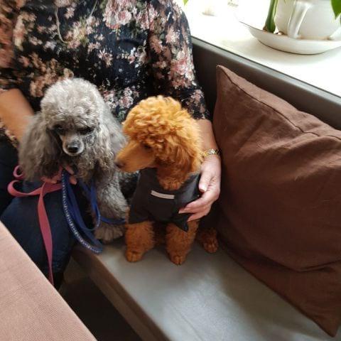 Vi här och fikade smaskig blodpudding tyckte hundarna – Photo from Himmelska Hundar by Berit S.