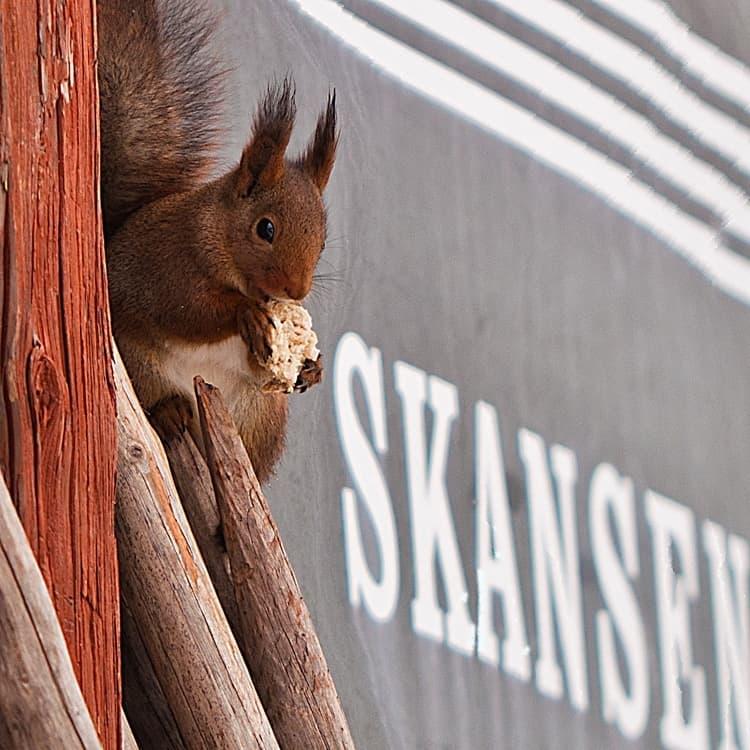 Fotograf: Marie Håkansson · Skansen