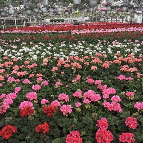 Ifall man vill passa på att köpa hem blommor. – Photo from Ulriksdals slottscafé by Jessica K.